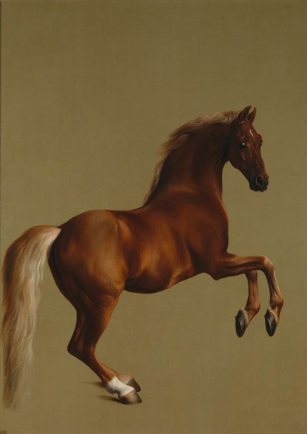 Stubbs, George: Whistlejacket. Racehorse/Equestrian Fine Art Sports Print/Poster. Sizes: A4/A3/A2/A1 (00256)